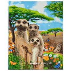 Meerkat familie  40x50 cm