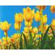 Tulipaner 40x50 cm Diamant Billede