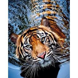 Tiger i vand - 30x40cm Diamant Billede